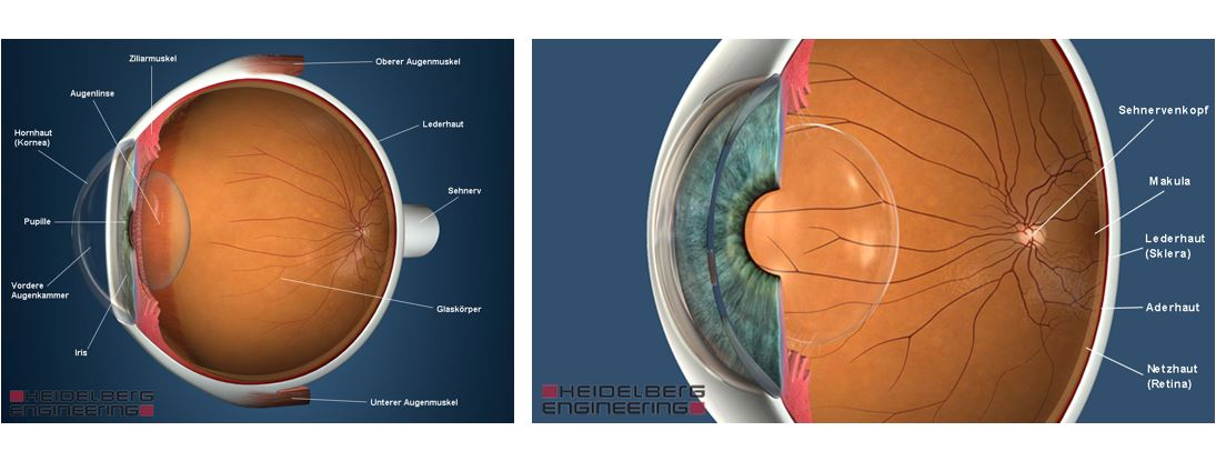 verkleinerte pupille einseitig